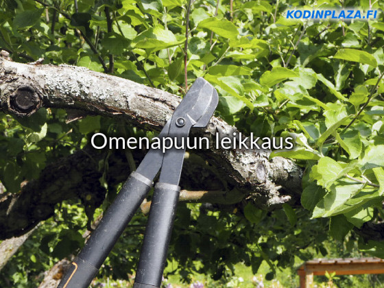Omenapuun Leikkaus Ajankohta